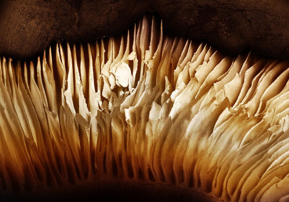 Alpert_terra_cibus_no_26_mushroom.jpg