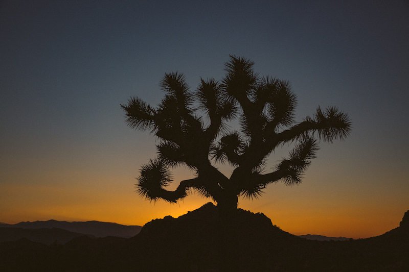 joshua-tree-engagement-session-049.jpg