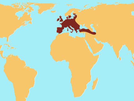 EuropeanFallowDeer.jpg