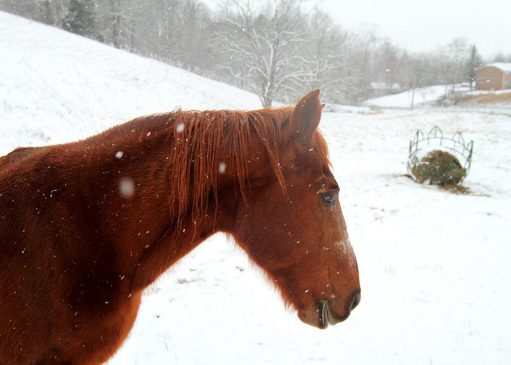 Snow9IMG_0531.jpg
