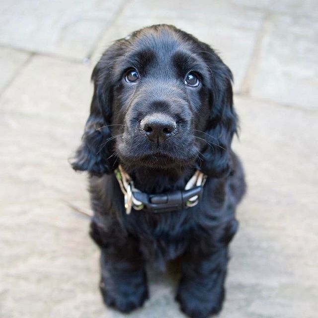 We just discovered it's #nationalpuppyday so our very own Statera HQ pup deserves a shoutout. Instagram, meet Billy 😍🐶. Day in and day out, he guards our office with a wagging tail and those puppy eyes, usually earning him a bite of whatever delicious food is going out that day. We are a bit biased, but we think he's the cutest around 💕 . . . . . #dogsofinstagram #puppy #wellbeing #family #dog🐶 #healthyliving #healthylife #healthydogs #healthyeating #staterafoods #lovedogs #happypup #todayistheirday
