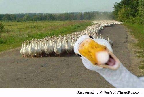 That one duck.jpg