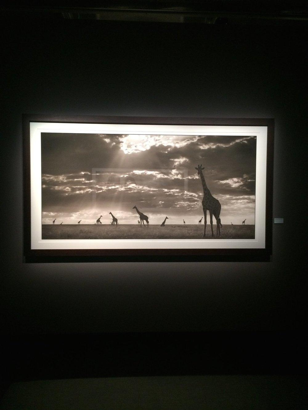 Photo at Fotografiska.