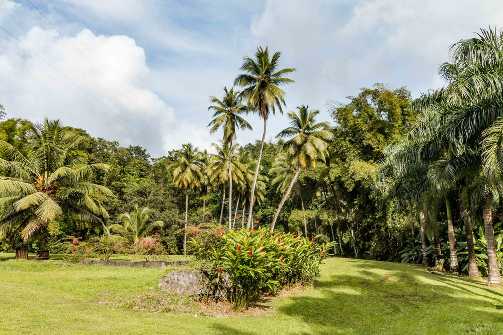 Martinique, Habitation Saint-Etienne, HSE : le jardin