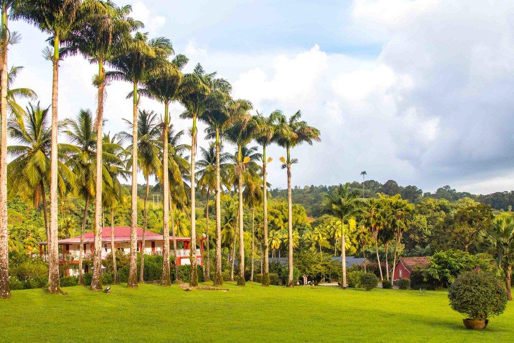 Martinique, Habitation Saint-Etienne, HSE : allée de palmiers royaux et la maison de maître