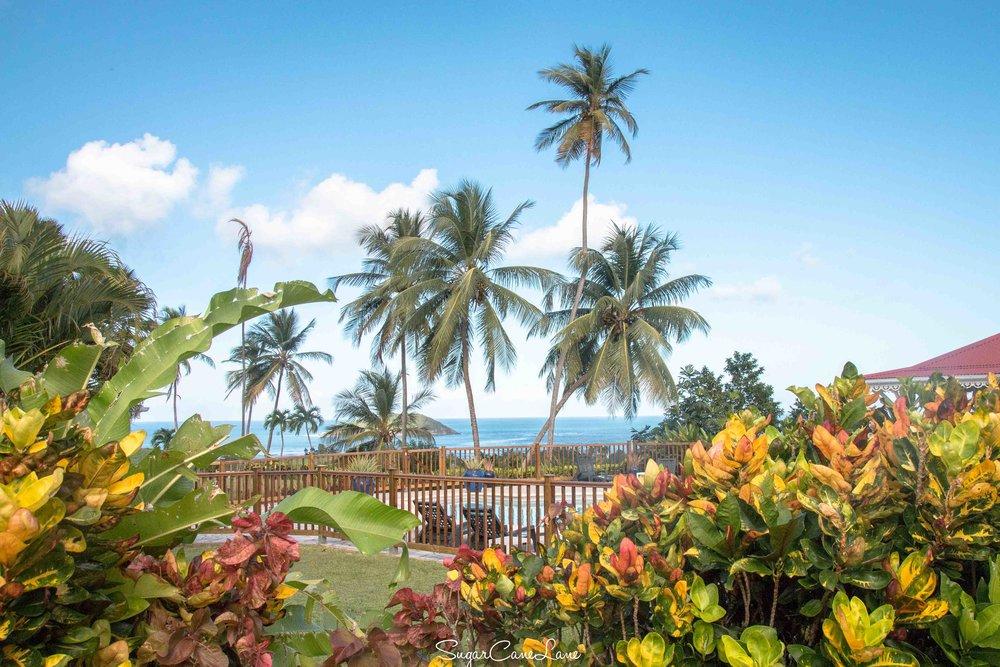 martinique, domaine saint-aubin : cocotiers