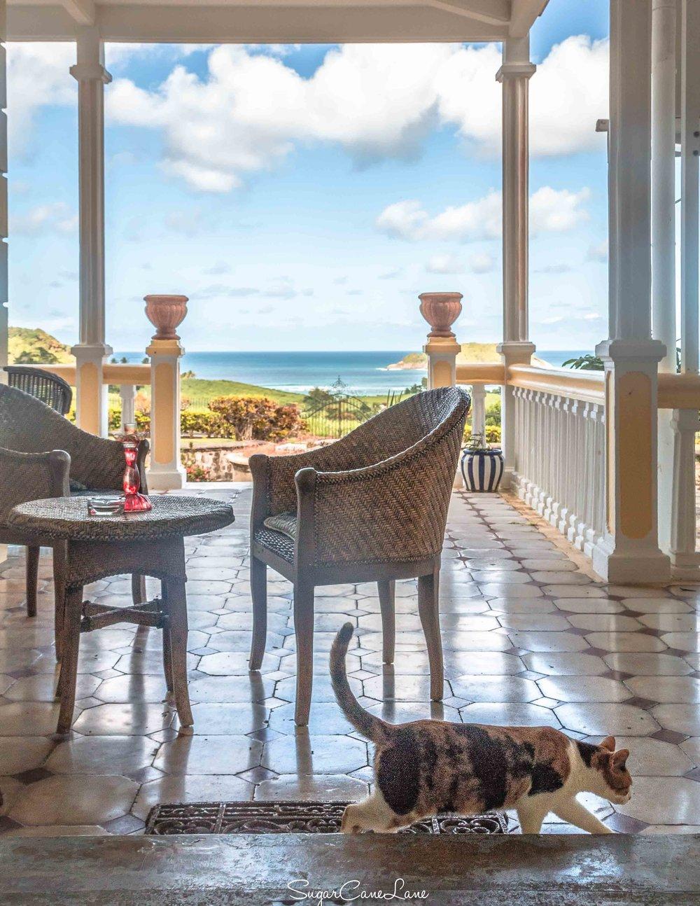 martinique, domaine saint-aubin : chat sur veranda