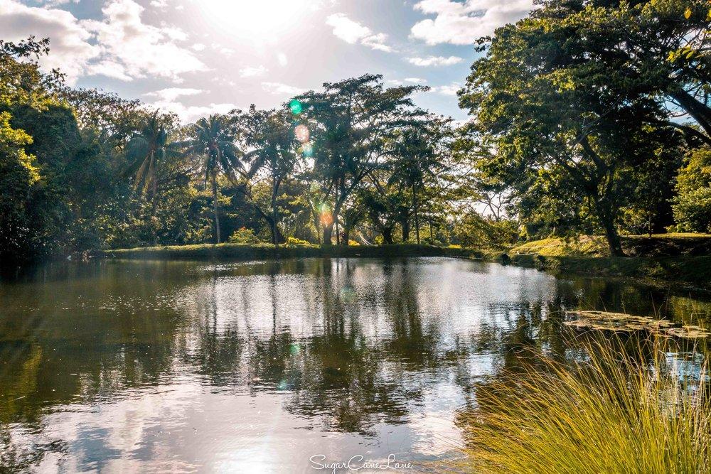 Martinique, bassin à ecrevisses de l'habitation Ceron