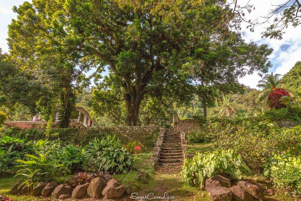 Martinique, habitation Ceron : escalier