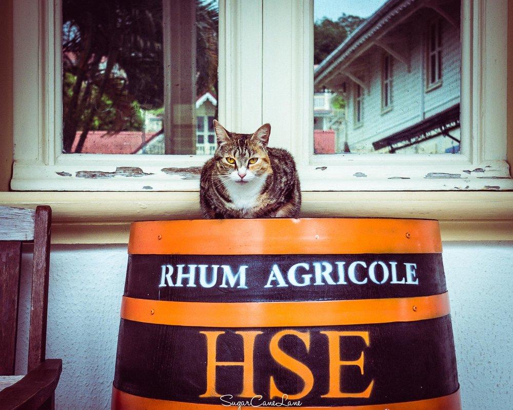martinique, chat sur fut de rhum agricole HSE