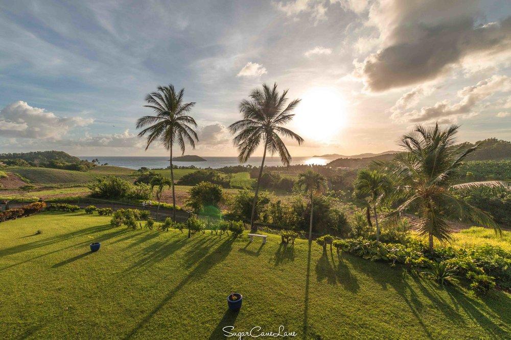 Domaine Saint-Aubin, Martinique : cocotiers