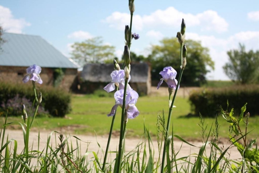 gite Baudron - fleurs