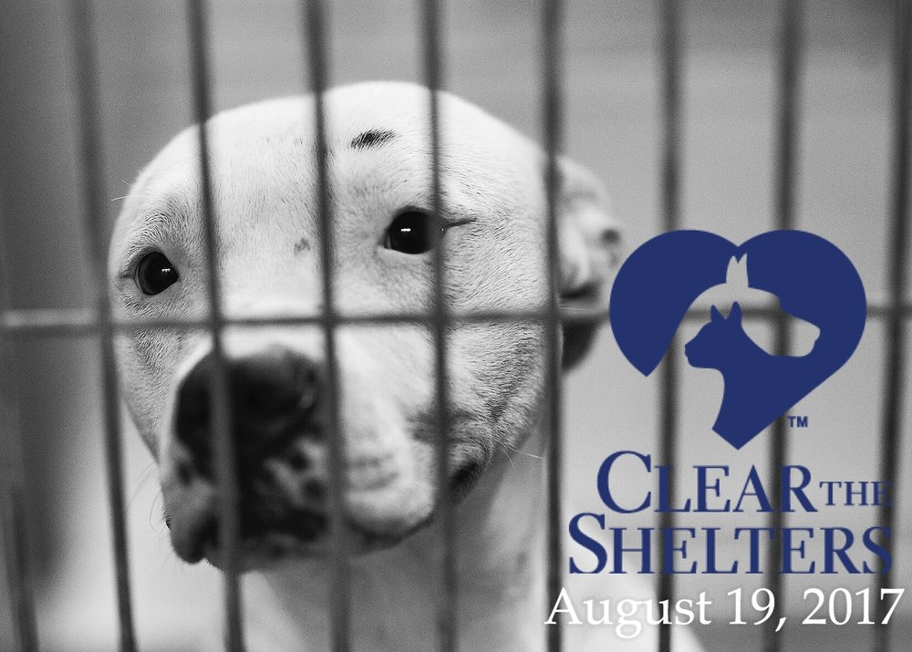 cleartheshelters.jpg
