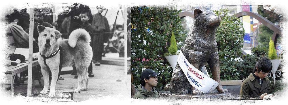HACHIKO, HET VOORBEELD van de trouw van de akita inu, en zijn standbeeld in SHIBUYA, tokyo.