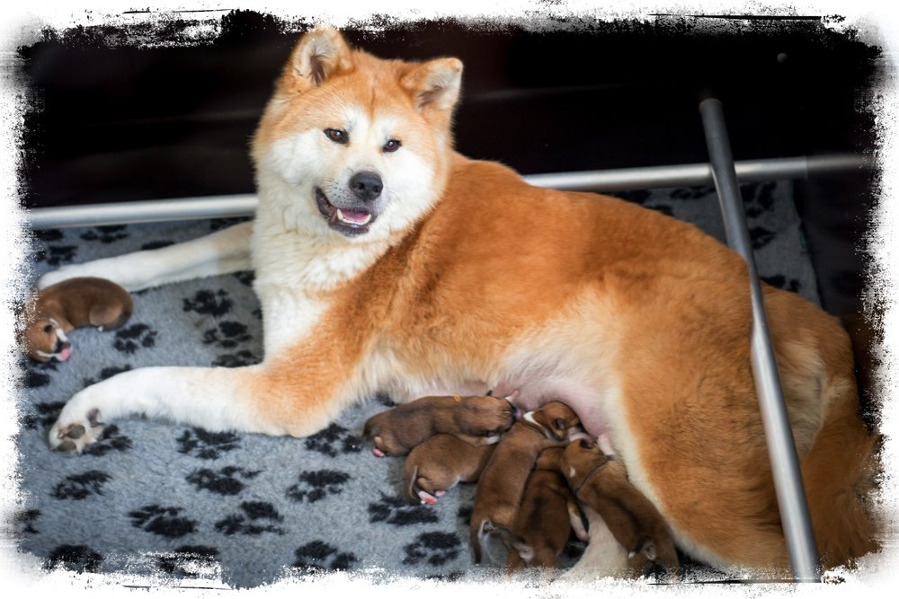 Foto Chihiro en pups