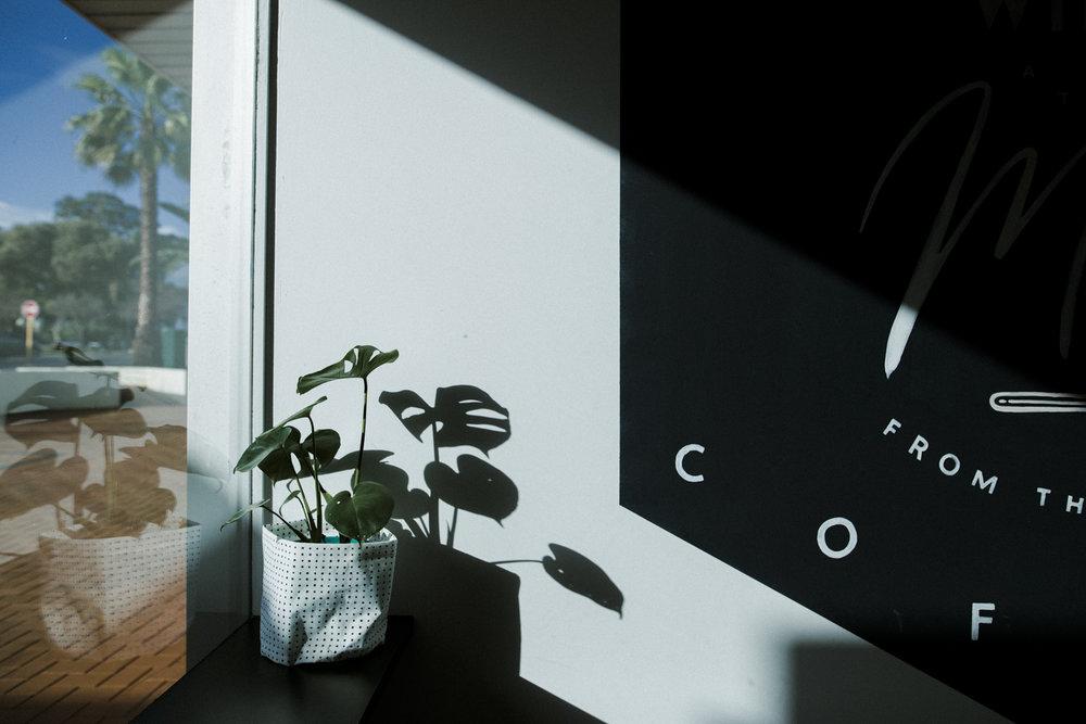 Sunny spot. Photo by Jenna Mason.