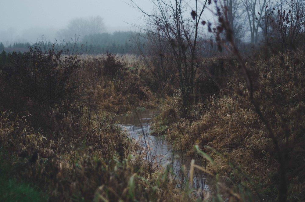 fall-6.jpg