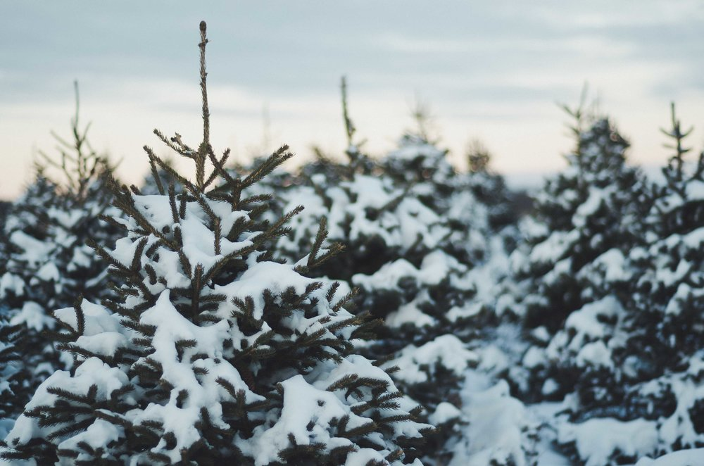 snow-33.jpg