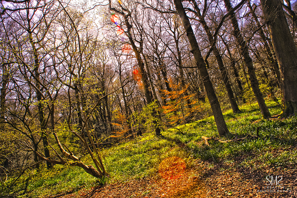 Autumn HDR