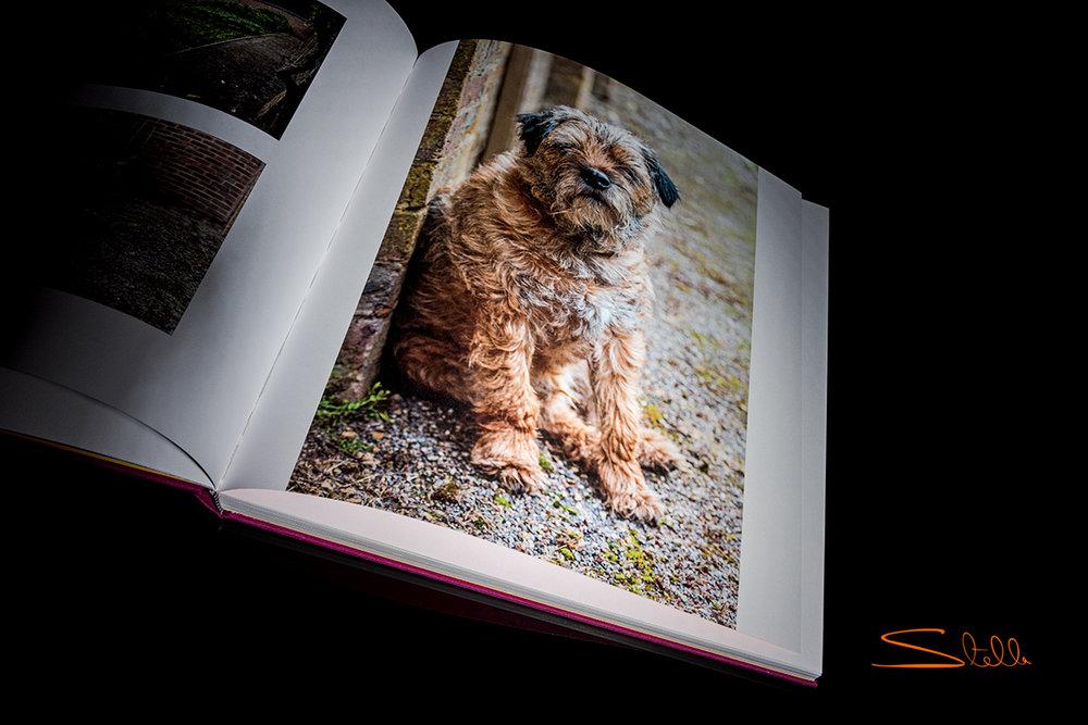 Stella_201802_Book_5.jpg