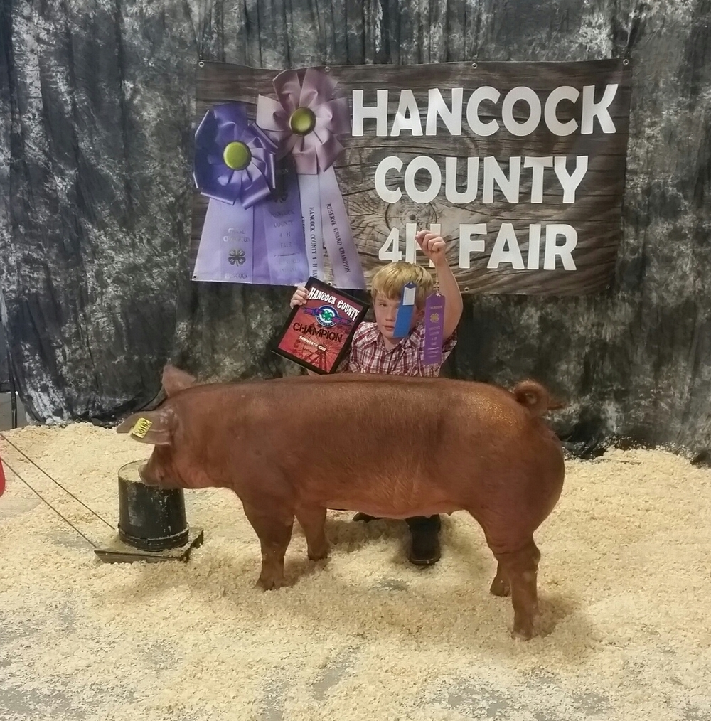 Champion Tamworth Gilt