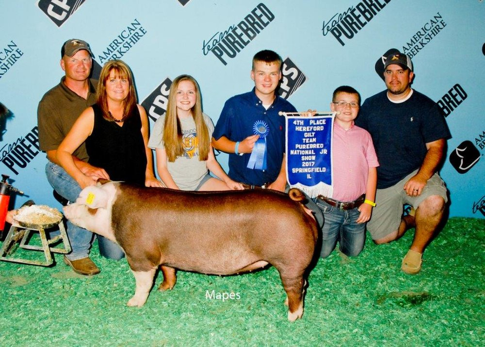NJS 4th Overall Hereford Gilt
