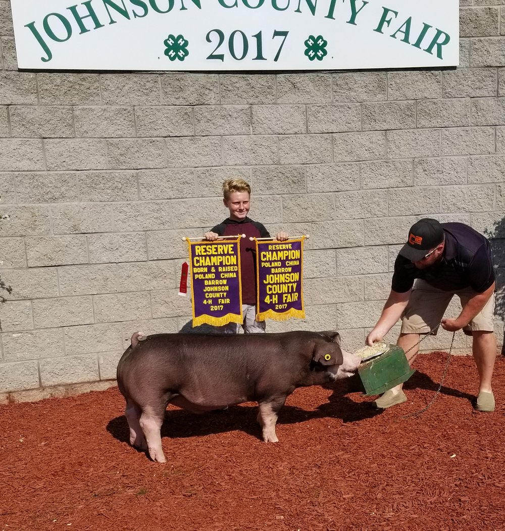 Reserve Champion Poland Barrow