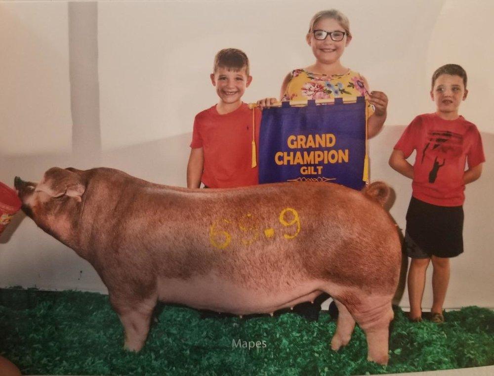 NHHA Grand Champ Gilt Shanafelt Kids 2018.jpg