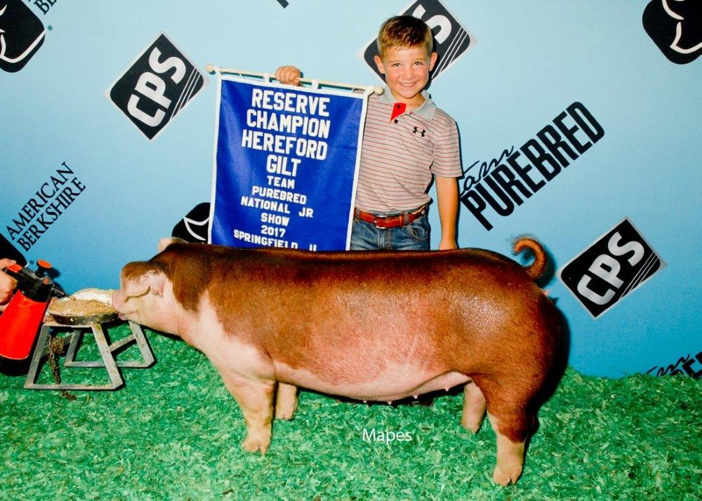 Reserve Champion Hereford Gilt Team Purebred Jr.jpg