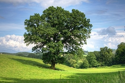 tree-402953__340.jpg