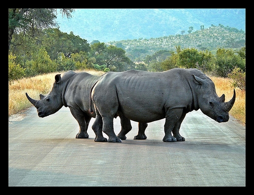 rhinoroadblock.jpg