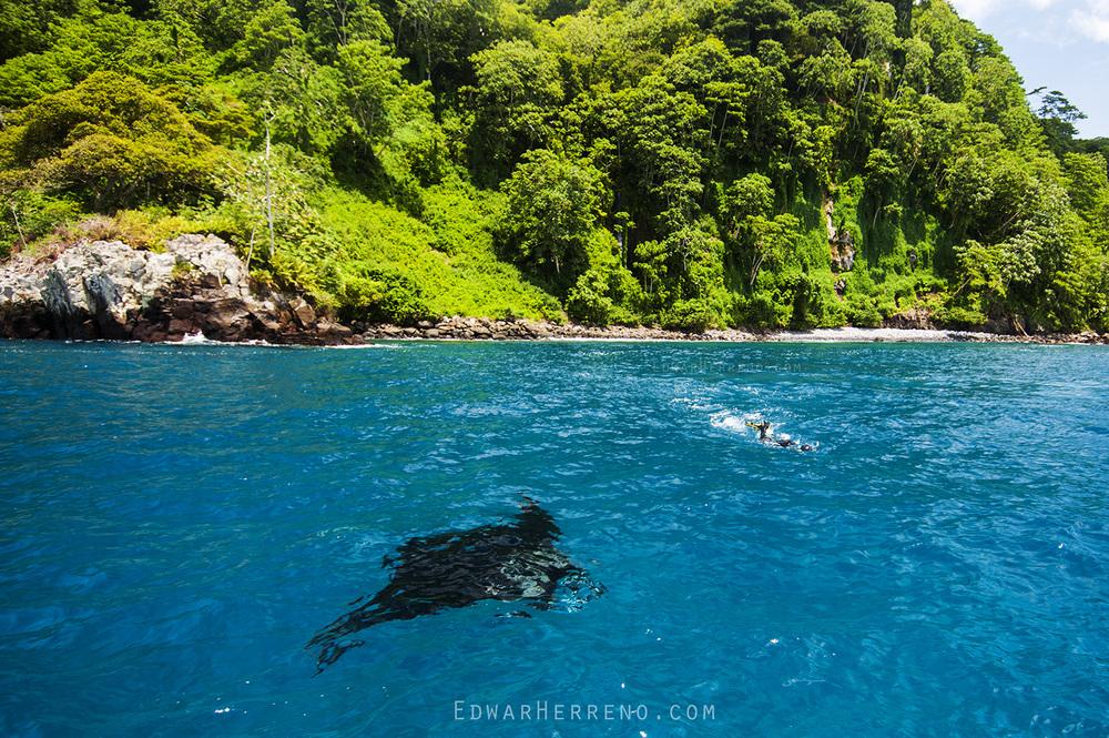 Giant Pacific Manta - Cocos Island