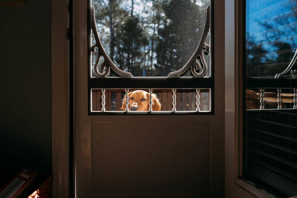Excuse me... may I come in please?