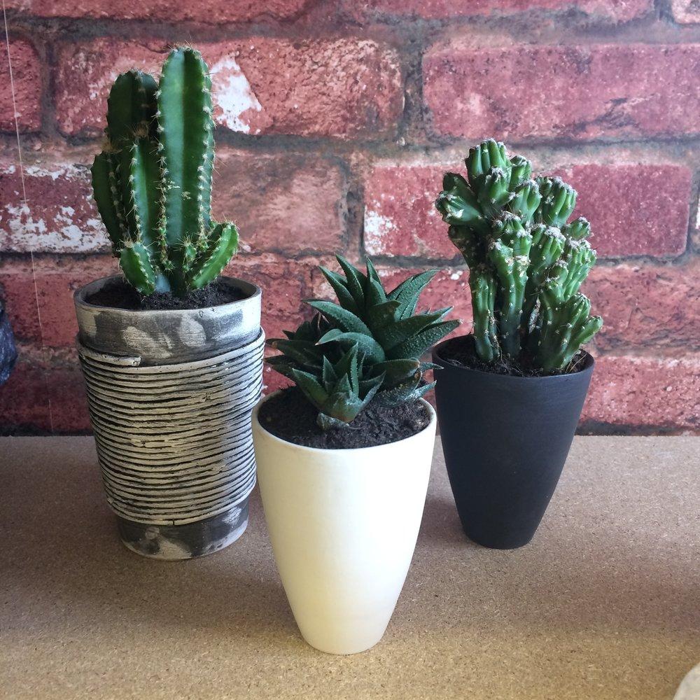 CBP ceramic planters.JPG