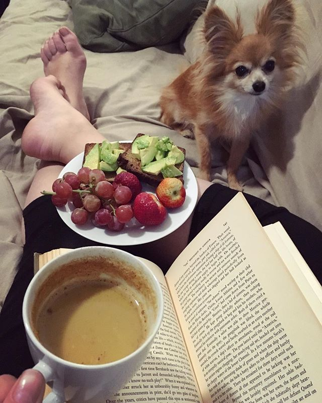 Saturday afternoon situation. Complete with tiny dog who is nonchalantly pretending not to be begging for food. But believe me she's begging! I've officially decided I love @mikeys paleo bread as it's nice to have avocado toast back on rotation and makes a nice addition to a cup of turmeric and @ancientnutrition  collagen latte. Oh, and for the people who keep asking me I collagen makes a difference to skin... I was at an event recently and chatting to a dermatologist who insisted on seeing my drivers license and she refused to believe I was in my mid 30s. Now I'm not going to say it's ALL the collagens doing, but it definite helps. And I like to think of it as insurance for when I'm in my mid 50s! . . . . #stayingyoung #lunch #saturdayafternoon #lazysaturday #relaxing #getsomerest #bookandchill #paleo #paleolunch #healthysnacks #paleobread #paleosnacks #tumericlatte #collagen #collagensupplement #smalldog #tinydog #chihuahuasofinstagram #teacupchihuahua #rescuedog #adoptdontshop #nutrition #healthieroptions #healthierchoices #healthylifestyle #skincarefromwithin #feedyourskin #goodskinstartsfromwithin #skincareroutine