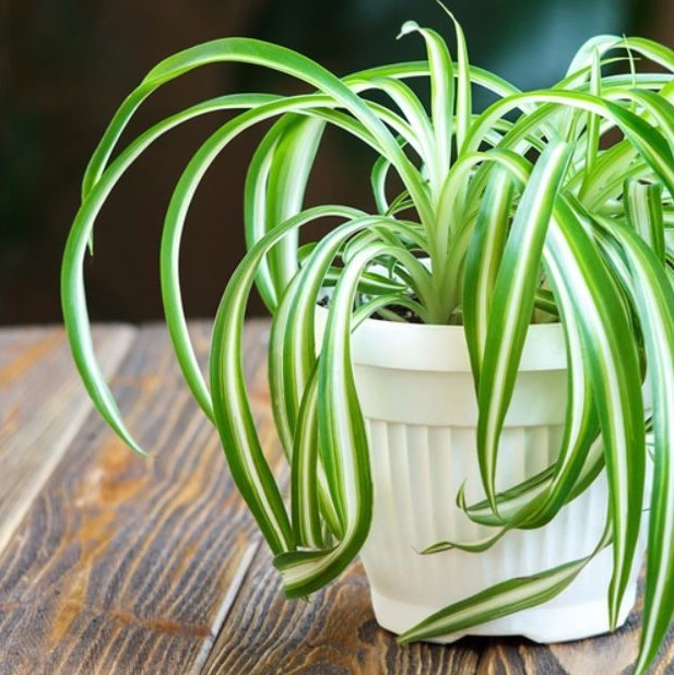 Indoor Air Purifying Plants | Making Room for Peace