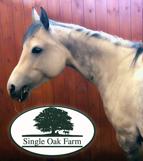 single oak farm puritan premium horse bedding