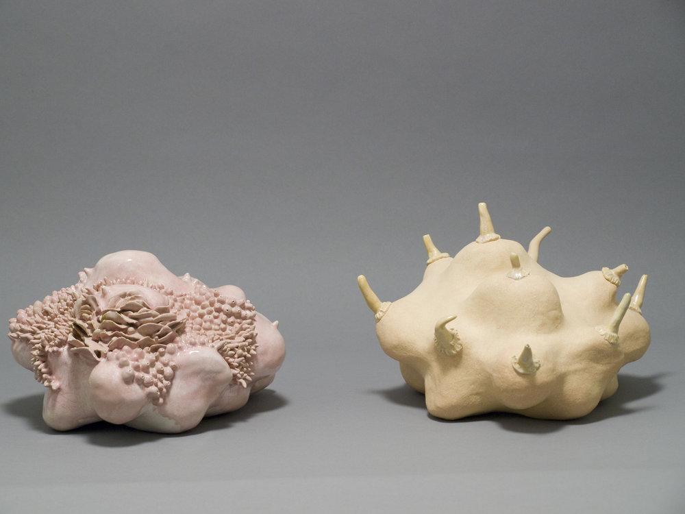beall 2 corals.jpg