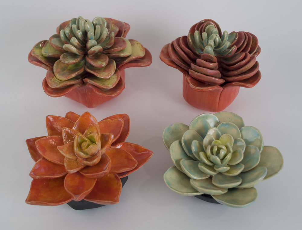 4 scucculents.JPG