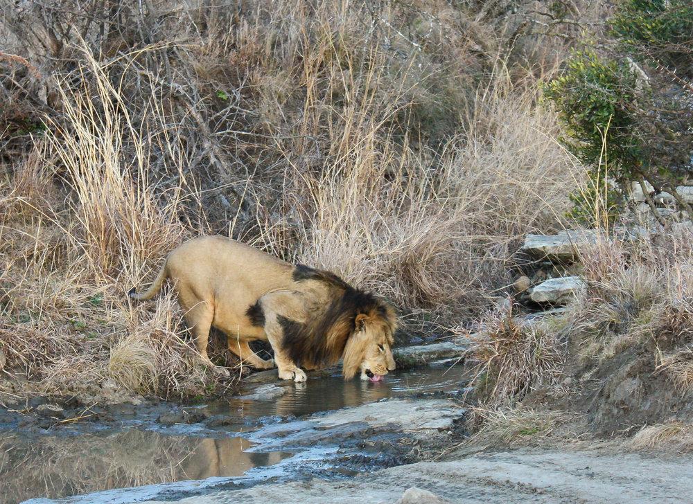wildlife safari article-3417-2.jpg