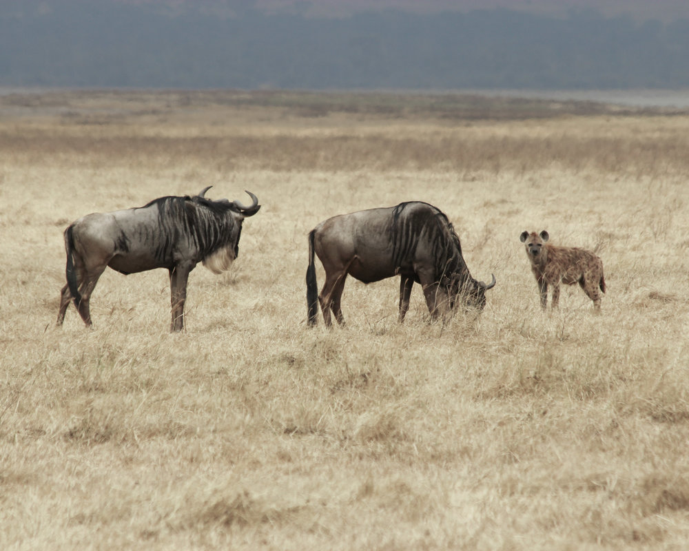 Christine Wheeler - Ngorongoro Safari-20.jpg
