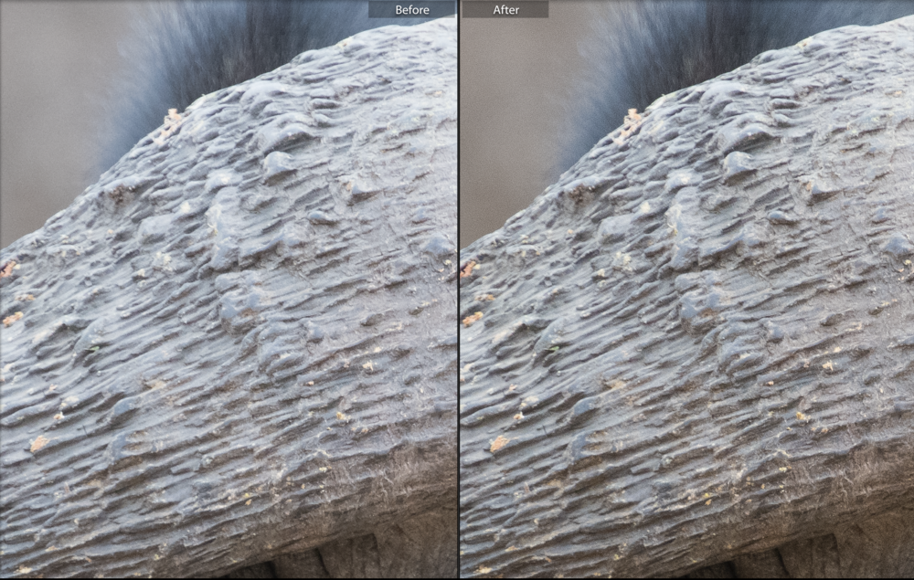 A sharpness adjustment on the right - you can see the subtle change in the detail of the horn.