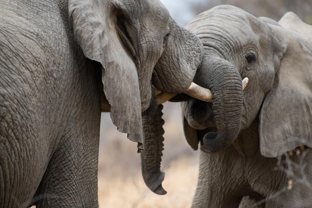 photography_elephants-1699.jpg