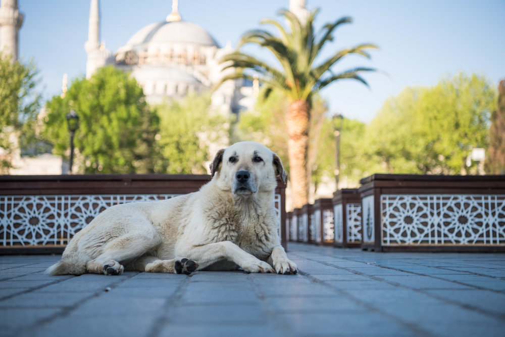 thetravelhub_istanbul_sultanahmet-2345.jpg