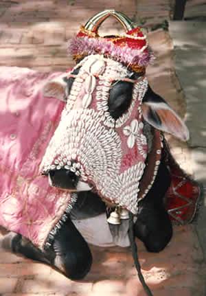 Hindu-Cow.jpg