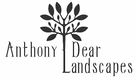 Anthony Dear Landscapes