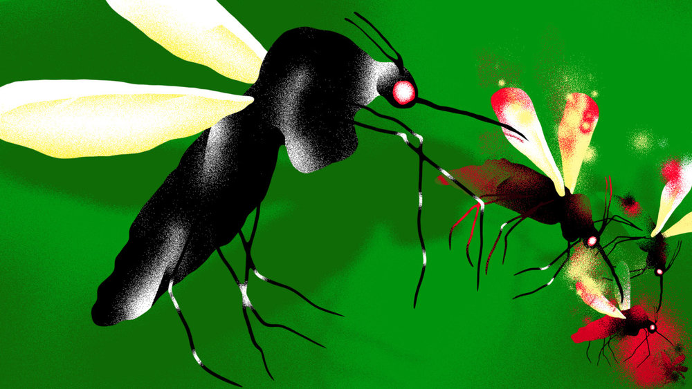 Alphabet's Latest Project Is Birth Control for Mosquitoes   Illustration by Daniel Zender