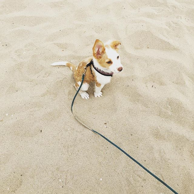 It's a good day #puppy #dog #beach