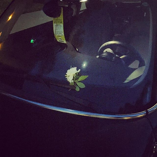 Woke up to find this flower on my windshield. #love #flower #surprise thanks @bambirockingyourworld