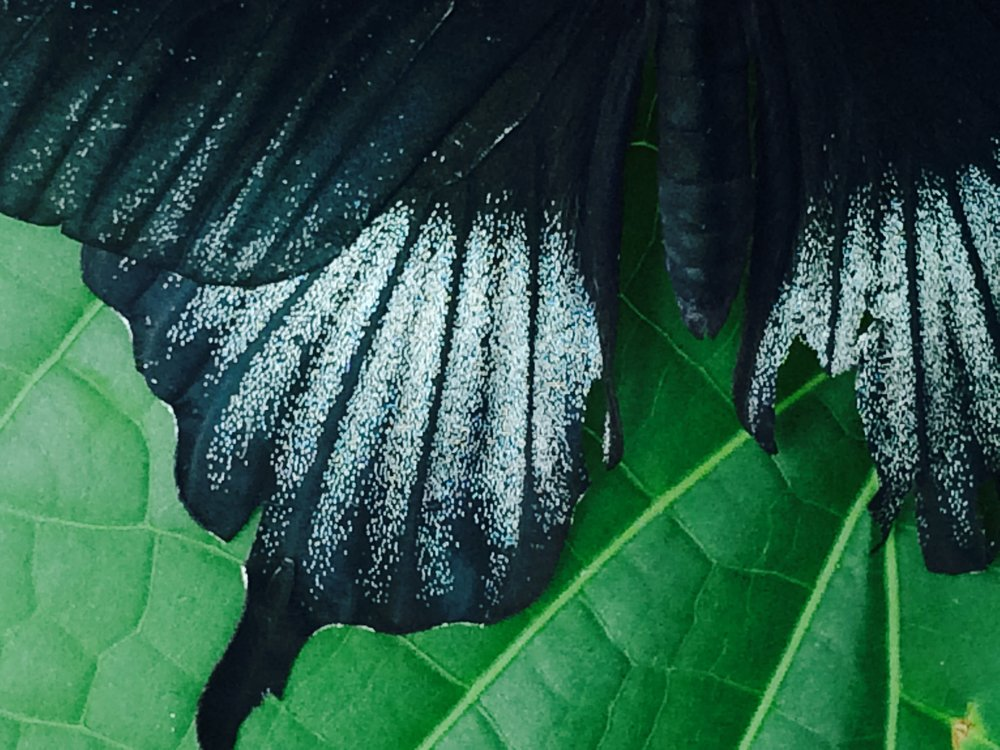 Butterfly wings. Photo by Jenny Epstein Kessem